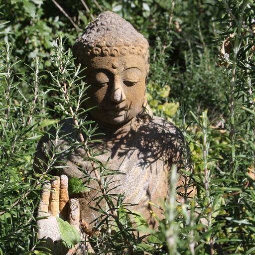 cropped-Bouddha.jpg